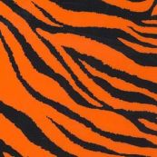 626 Zèbre orange fluo
