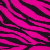 623 Zebra neonrosa